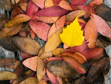 Seasons of Ealing photo competition - autumn