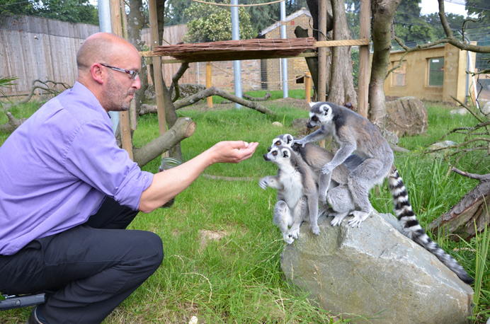 Hanwell Zoo manager Jim Gregory feeding the lemurs
