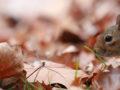 Anthony Bennett - winning entry for Seasons of Ealing autumn 2018