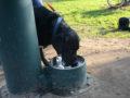 Ealing Mile fountain in Lammas Park