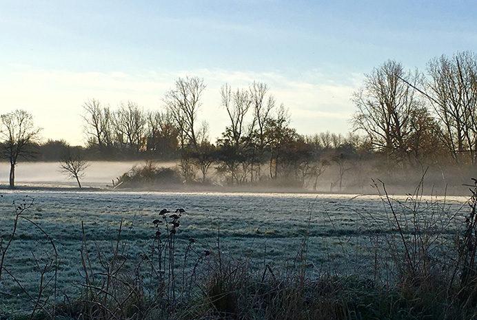 Lynn Wilson - Stockdove Way in Perivale misty morning