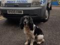 Parkguard's sniffer dog Charlie