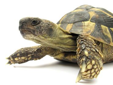 Register to vote in election - tortoise