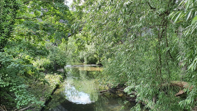 tree river brent hanwell